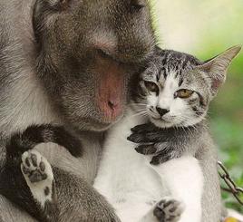maymun ile kedinin maceraları